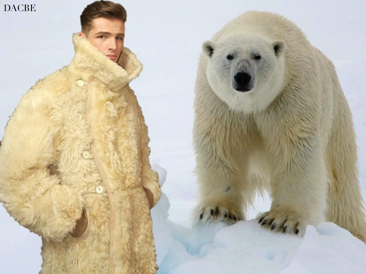 Real Bear Fur Coat Tradingbasis