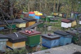 Bee yard.